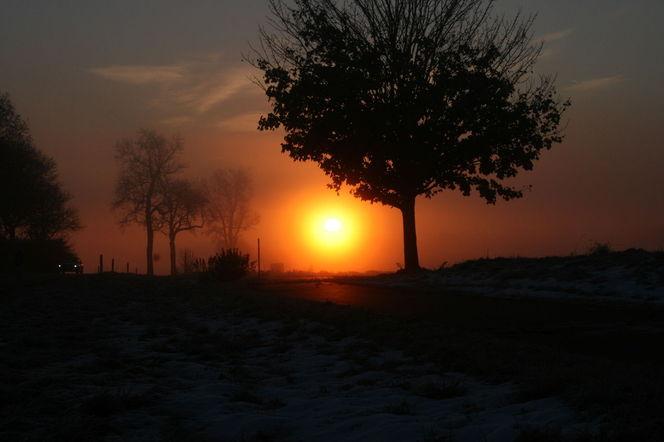 Feld, Sonne, Acker, Baum, Wolken, Früh