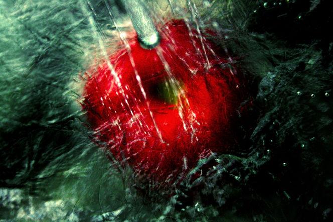 Glas, Strahl, Rot, Wasser, Tropfen, Tomate