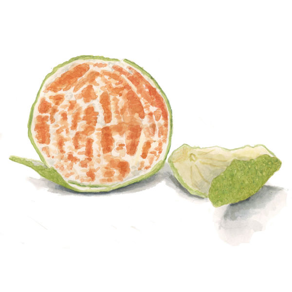 Clementinen, Nahrung, Obst, Orange, Mandarine, Aquarell