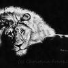 Malerei, Realismus, Wildtier, Tierwelt