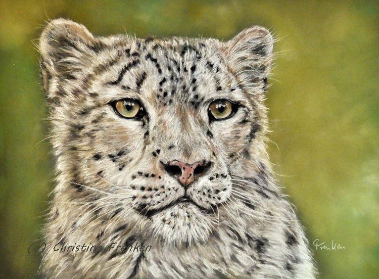 Pastellmalerei, Raubtier, Realismus, Schneeleopard, Zoo, Tierportrait