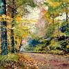 Wald, Farben, Herbst, Baum