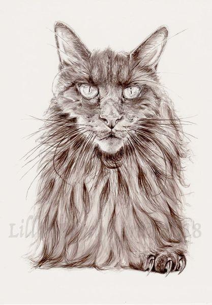Schwarz, Katze, Zeichnung, Tusche, Illustration, Böse