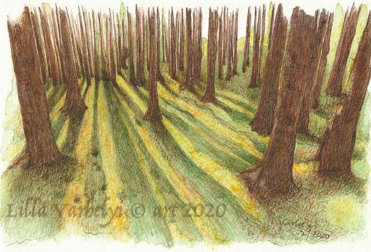 Wald, Landschaft, Schatten, Baum, Studie, Tuschmalerei