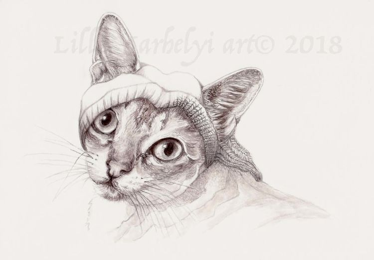 Katze, Tierportrait, Monochrom, Bister, Illustration, Tuschezeichnung