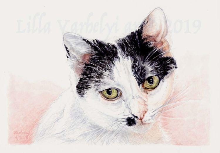 Tierportrait, Katze, Tuschezeichnung, Gegenlicht, Tiere, Zeichnungen