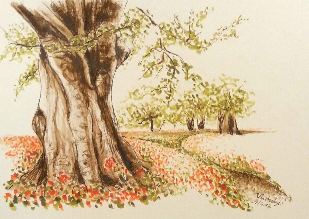 baumskizze 1 - baum, natur, skizze, landschaft von lillavarhelyi bei