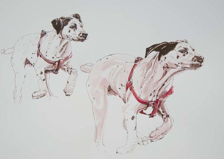 Hunderennen, Tuschmalerei, Rennen, Tiere, Hund, Zeichnungen