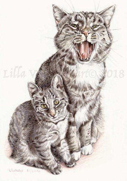 Tierportrait, Tiere, Auftragsarbeit, Tuschmalerei, Katze, Zeichnungen