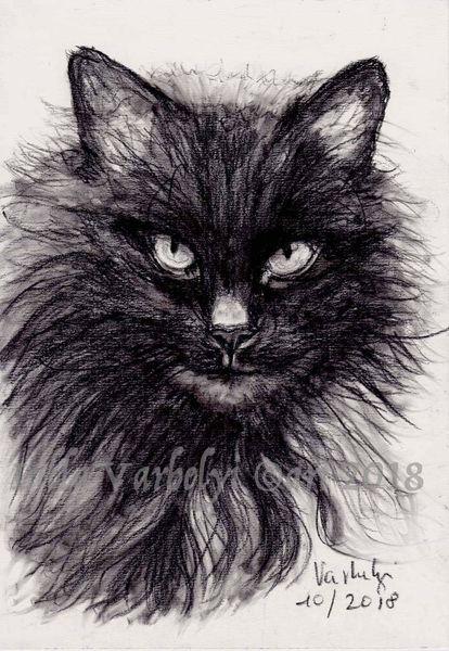 Skizze, Tierzeichnung, Katze, Tierportrait, Schwarzekatze, Kohlezeichnung