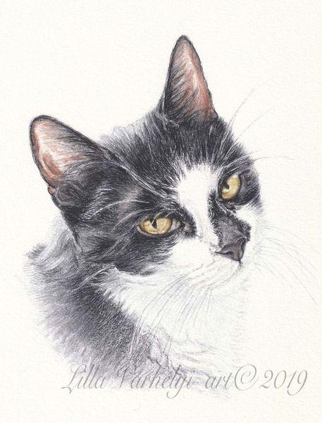 Katze, Zeichung, Tierportrait, Tuschmalerei, Auftragsarbeit, Tiere