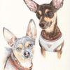 Tierzeichnung, Tuschezeichnung, Hund, Tuschmalerei