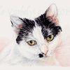 Tuschezeichnung, Gegenlicht, Katze, Tiere