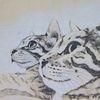 Katzenmix, Augen, Tiere, Licht