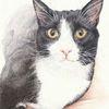 Tierzeichnung, Tierportrait, Tuschmalerei, Katze