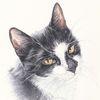 Tuschmalerei, Auftragsarbeit, Tiere, Katze