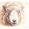 Tierportrait, Wolle, Schaf, Tuschmalerei