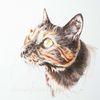 Katze, Tuschmalerei, Tierportraut, Auftragszeichnung