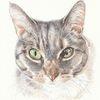 Tierportrait, Auftragsarbeit, Augen, Tuschmalerei