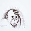 Tuschmalerei, Orang utan, Tierportrait, Federzeichnung
