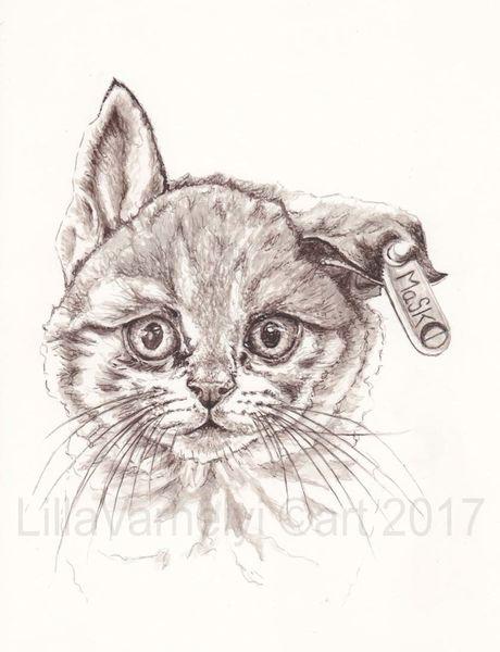 Tusche, Katerchen, Hybride, Zeichnung, Illustration, Katze