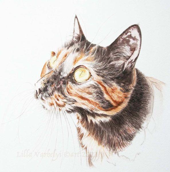 Katze, Tuschmalerei, Tierportraut, Auftragszeichnung, Glückskatze, Zeichnungen