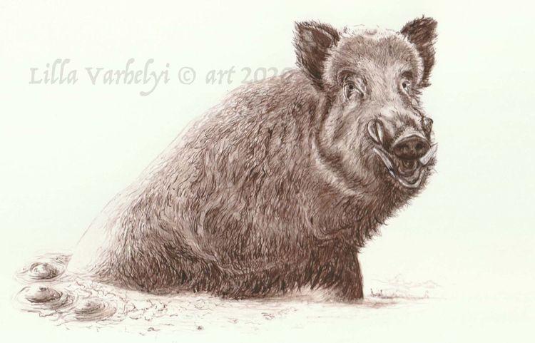 Illustration, Zeichnung, Wildtier, Wildschwein, Tiere, Monochrom