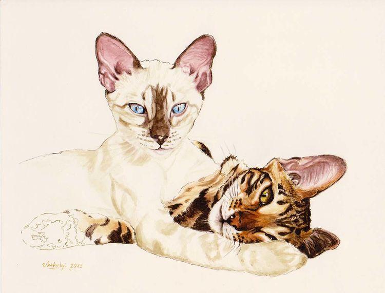 Augen, Katze, Siamkatze, Tierportrait, Bengalkatze, Tusche