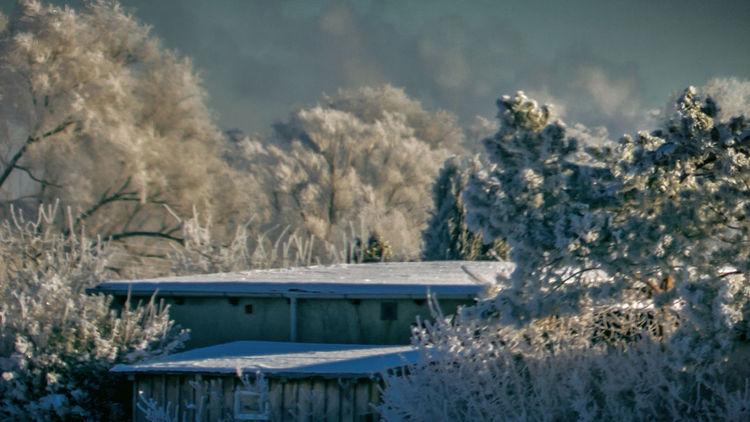 Frost, Raureif, Winter, Fotografie, Frostig
