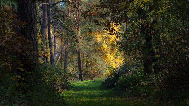 Baum, Licht, Wald, Fotografie