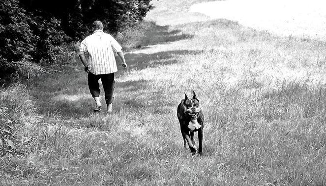 Hund, Wiese, Göttergatte, Boxer, Ausflug, Fotografie