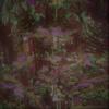 Tanne, Blüte, Wald, Blätter
