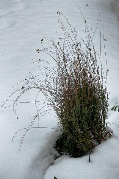 Vergänglichkeit, Hdr, Winter, Fotografie, Frost, Pflanzen