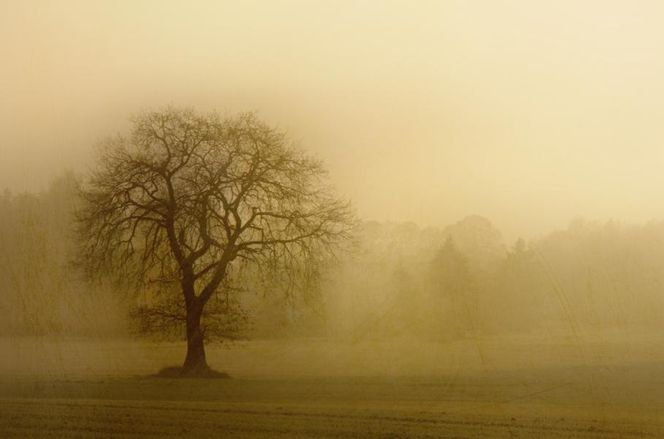 Nebel, Baum, Morgen, November, Landschaft, Fotografie