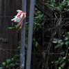 November, Blumen, Blüte, Fotografie