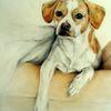 Hundeportrait, Hundezeichnung, Zeichnungen, Beagle
