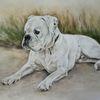 Bulldogge, Hundeportrait, Hundezeichnung, Zeichnungen