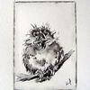 Tuschezeichnung, Junger vogel, Tierzeichnung, Zeichnungen