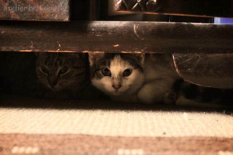 Haustier, Tierheim, Katze, Katzenhilfe, Felidae, Fotografie