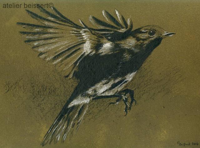 Feder, Rotkehlchen, Fliegen, Vogel, Tiere, Zeichnungen
