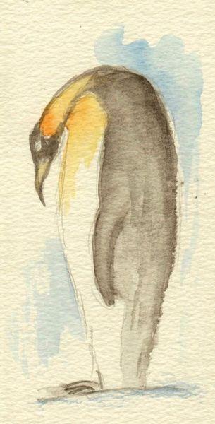 Tiere, Pinguin, Aquarellmalerei, Aquarell