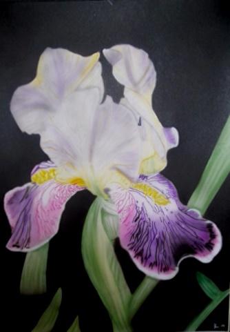 Illustrationen, Iris