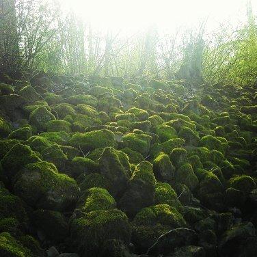 Grün, Landschaft, Moos, Stein, Fotografie