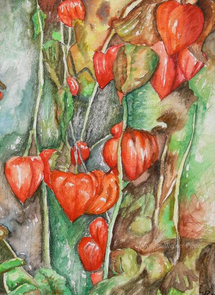 Physalis, Aquarellmalerei, Stark farbig, Rot, Aquarell