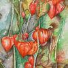 Physalis, Aquarellmalerei, Stark farbig, Rot