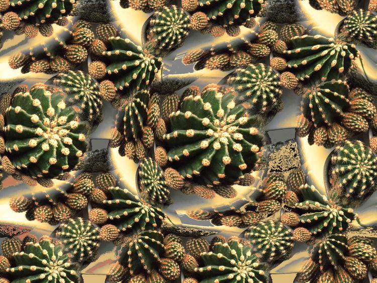 Kaktus, Digitale kunst, Invsiv, Seigelkaktus, Invasion, Bauernkaktus