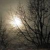 Herbst, Baum, Outsider art, Nebel