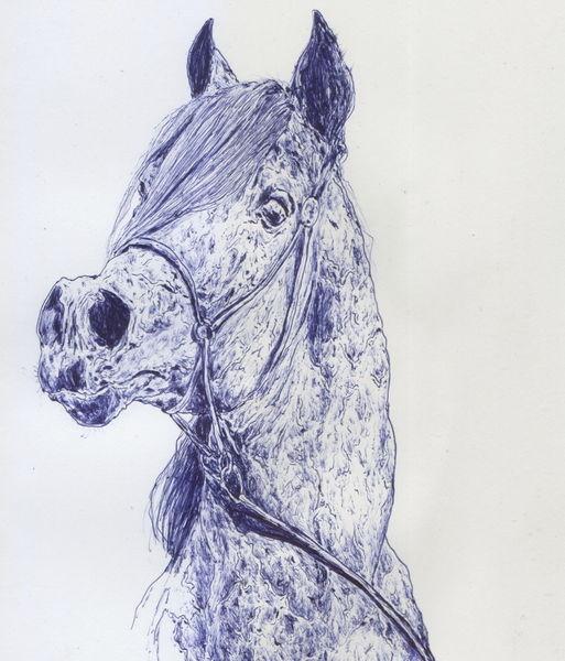 Kopf, Hottehüh, Tiere, Anatomie, Pferde, Kugelschreiber