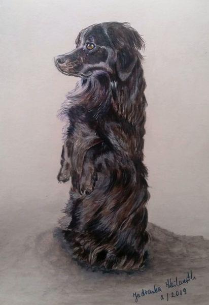 Hund, Schwarz, Tusche, Zeichnungen, Tiere
