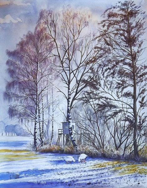 Kälte, Gänse, Sonne, Hochsitz, Dezember, Birken